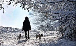 Snow-dog-walk-007